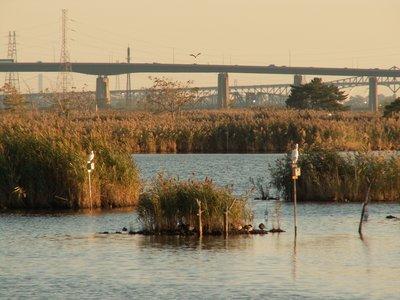 Birds_and_Bridges.jpg