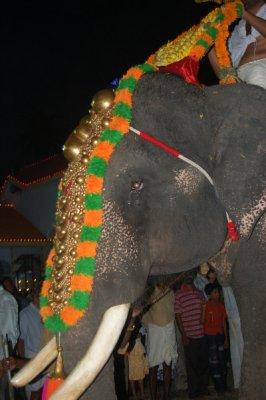 Elephant_d..estival.jpg