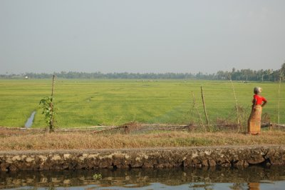 Rice_field_backwaters.jpg
