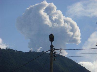 big plume