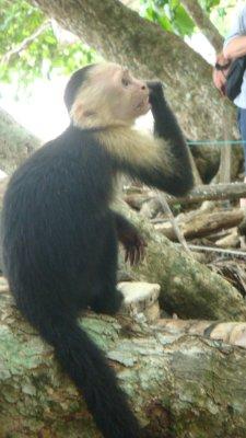 capucine_monkey__13_.jpg