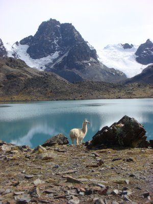 lake and llama