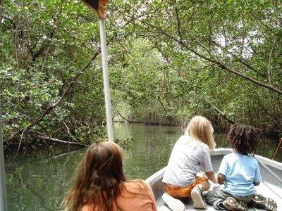 mangrove_channel__2_.jpg
