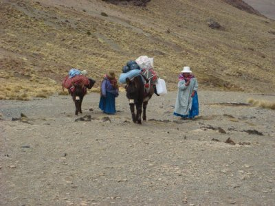 mules and helpers (3)