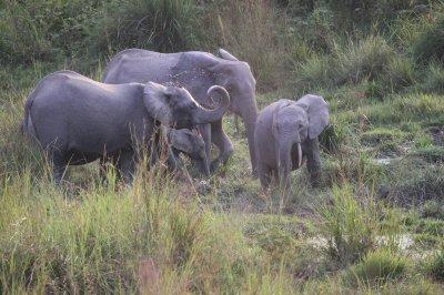 Lome National Park