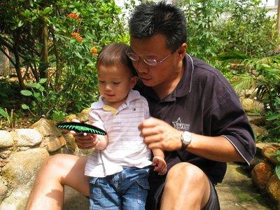 Bodhi admires the Raja Brooke butterfly. (Malaysia)
