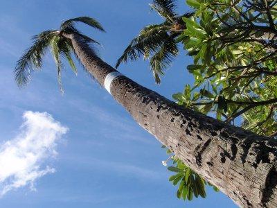 Hawaii_009.jpg