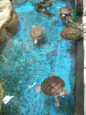 Tortoises, or are they turtles?