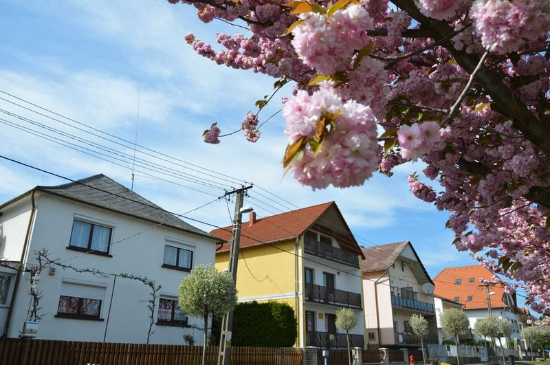 """Sakura"" in Hévíz"