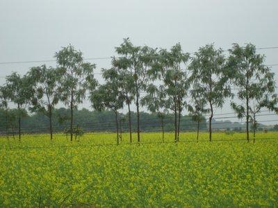Agriculture Farm