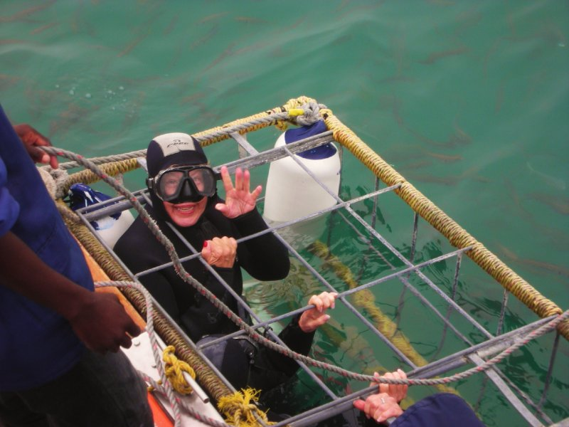 Great White Shark cage diving in Gansbaai