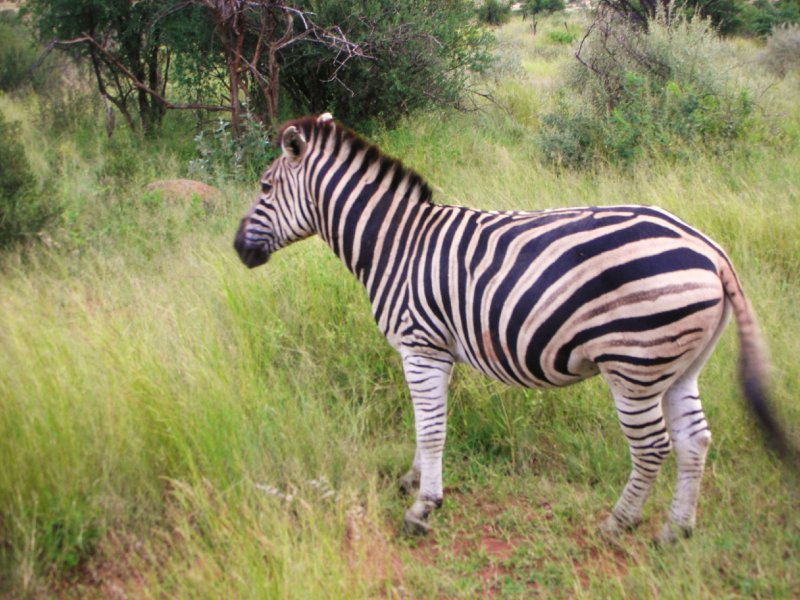 Pilanesburg Nature Preserve game drive near SunCity