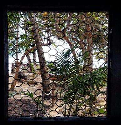 Chicken wire windows