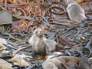 seal-seaweed.jpg