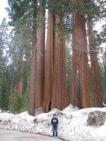 Julie_and_sequoia.jpg