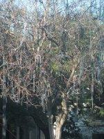 bead-tree.jpg
