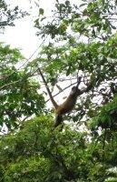monkey3.jpg