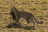 Leopard_Kill.jpg