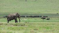 Ngorongoro_Elephant.jpg