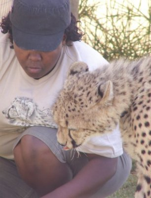 Lunch Time for Cheetah