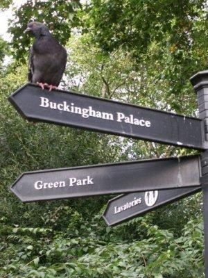 This way to Buckingham Palace