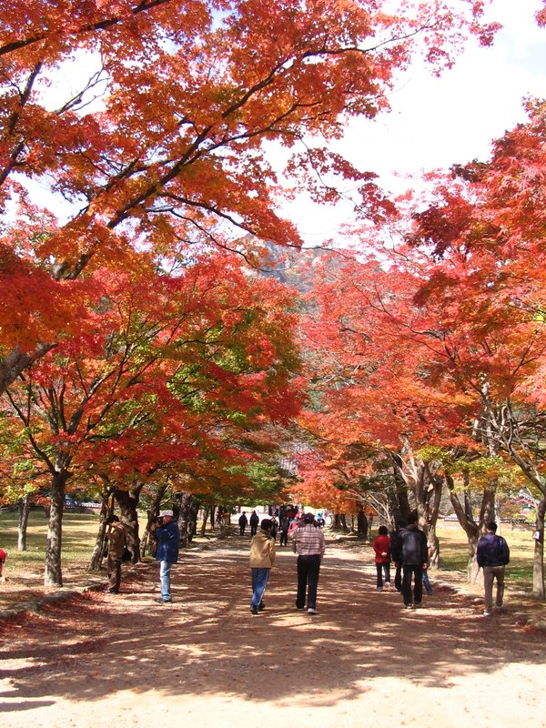 Autumn - Pathway to Naesosa Temple
