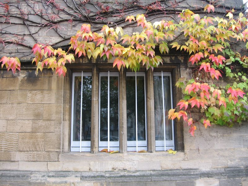 Ivy-covered window in Oxford