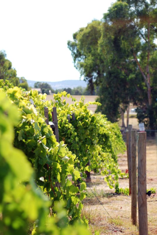 Perth [day six] Vineyards
