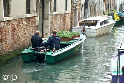 or simply flower pots - Venice