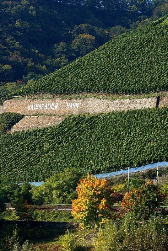Vineyard at Braubach - Land Rheinland-Pfalz