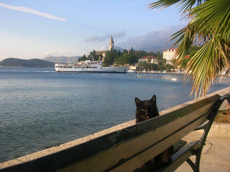 Katt og Postira i havnen på Lopud.