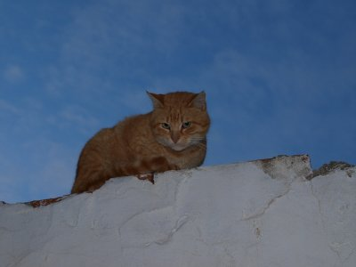 Kitty in Sidi Bou Said