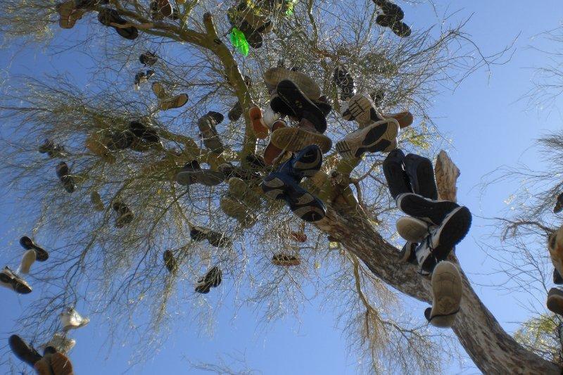 Shoe Tree (7)
