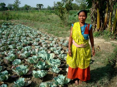 Laxmi with her cabbage crop