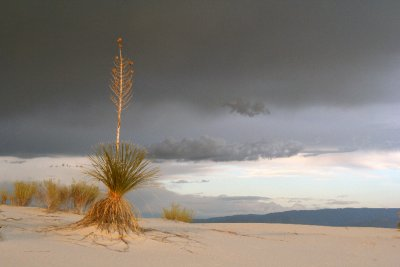 Stormy Yucca