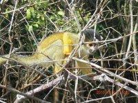 Monkeys_in_the_pampas.jpg