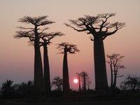 mad16_boab.._sunset.jpg