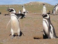 penguins_2.jpg