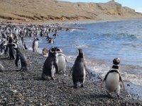 penguins_4.jpg
