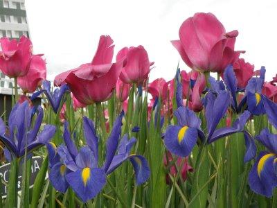 May_2010__..val_023.jpg