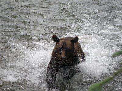hyder_bear_1_017.jpg