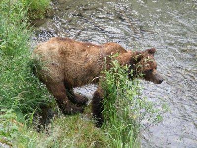 hyder_bear_1_029.jpg
