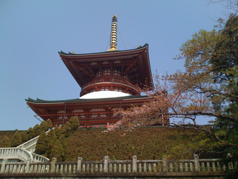 Temple pagoda with cherry blossoms