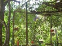 Trinidad - Country's bird