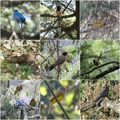 Birds of Landour