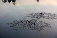 _MG_0397 Angkor Wat