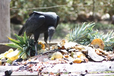 Costa_Rica..009_028.jpg