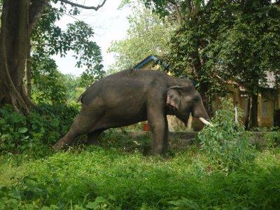 170_Poor_Elephant.jpg