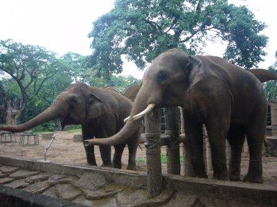 408_Botani..and_Zoo.jpg