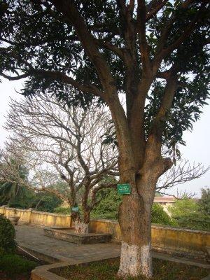 7091_Big_Trees.jpg